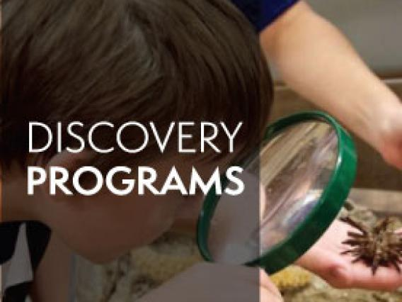 discovery programs